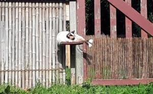Les chats du gîte Riparia